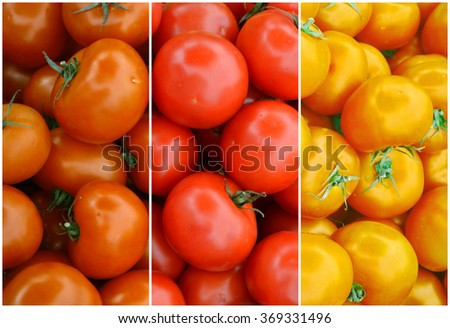 Collage of different types of fresh and sweet red, yellow and orange tomatoes from the farm market - stock photo