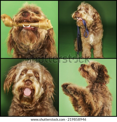 Collage of dog doing various activities over green background - stock photo