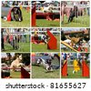 Collage of dogs in agility - stock photo