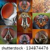 Collage of extreme macro portraits of flies. - stock photo