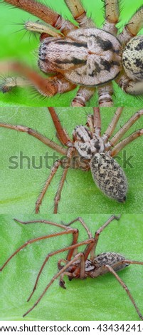 Collage of extreme sharp spider images (Longer side of one image is 2700 pixels)  - stock photo
