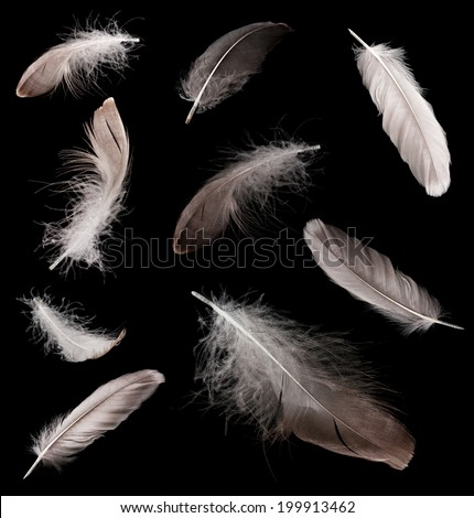 Collage of feathers on black background - stock photo