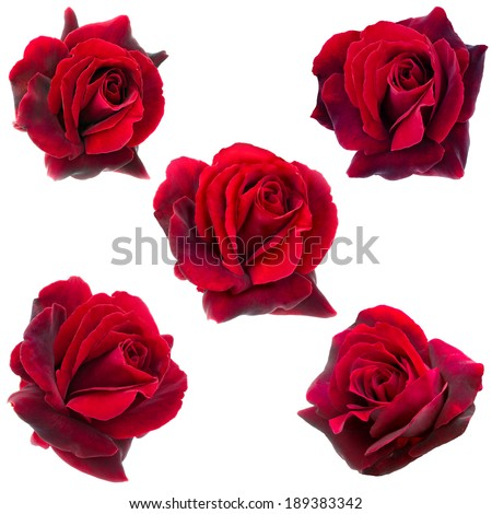 collage of five dark red roses - stock photo