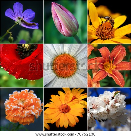 Collage of flowers - stock photo