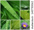 Collage of fresh green leaves and water lily whith drop water - white border - stock photo