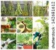 Collage of fresh herbs on balcony garden - stock photo