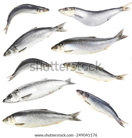Collage of fresh herring fishes, isolated on white - stock photo