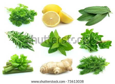 Collage of green and juice spice on white background. - stock photo