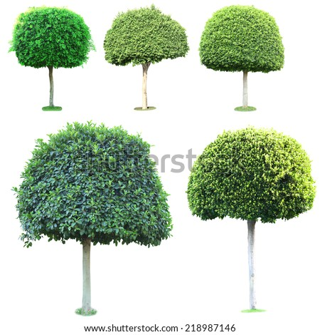 Collage of green trees isolated on white - stock photo