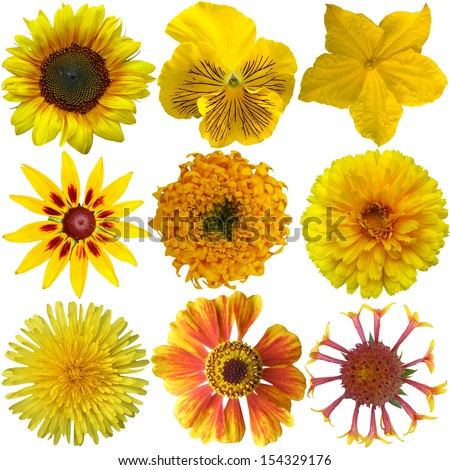 Collage of isolated yellow flowers  - stock photo