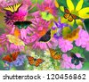 Collage of North American butterflies and flowers - stock photo