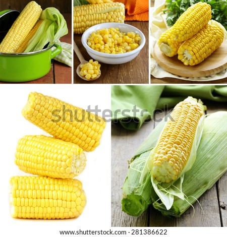 collage of organic fresh and canned corn - stock photo