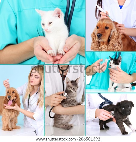 Collage of pets at vet - stock photo