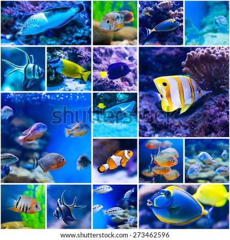 Collage of photos colorful fish in aquarium saltwater world - stock photo