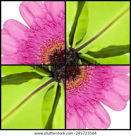 Collage of pink Gerbera and green Fern leaves in a square frame - stock photo