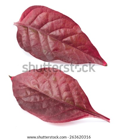 Collage of Red leaf isolated on white background - stock photo