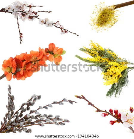 Collage of spring blooming twigs isolated on white - stock photo