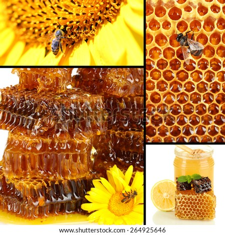Collage of sweet honey and honeycombs - stock photo