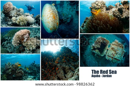 Collage of underwater images - The Red Sea - stock photo