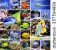 Collage of underwater photos. Collection of tropical fishes - stock photo