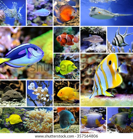 Collage of underwater photos. Collection of tropical fishes