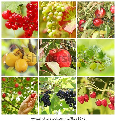 collage of various fresh fruits in the garden - stock photo