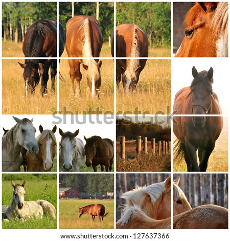 Collage of various horse images - stock photo