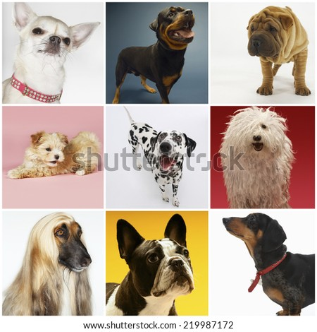 Collage of various pet dogs - stock photo