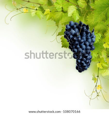Collage of vine leaves and blue grape on white background - stock photo