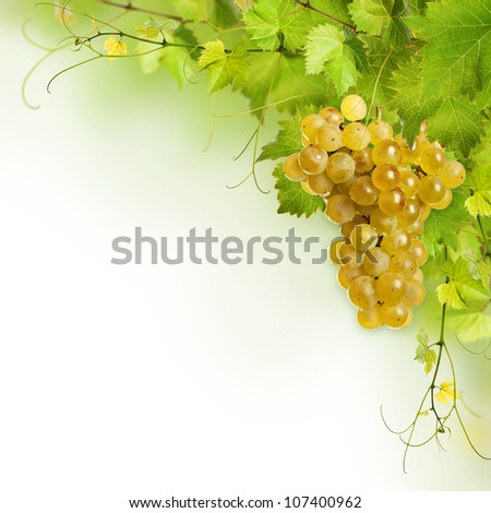 Collage of vine leaves and yellow grape on white background - stock photo