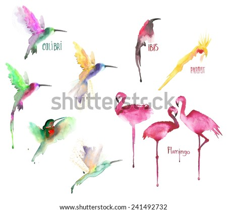 Collage of watercolor drawn birds isolated on white background - stock photo