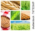 Collage of wheat and wheat products - stock photo