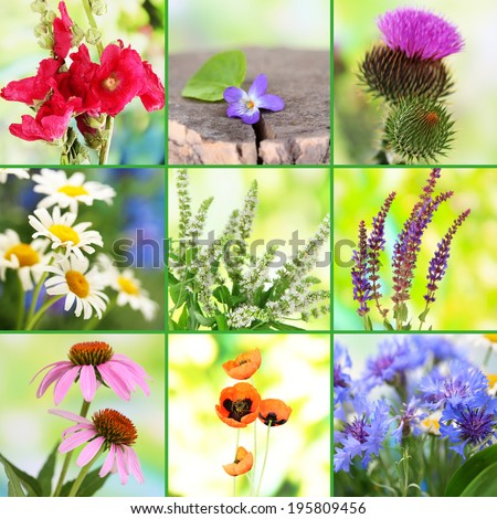Collage of wildflowers - stock photo