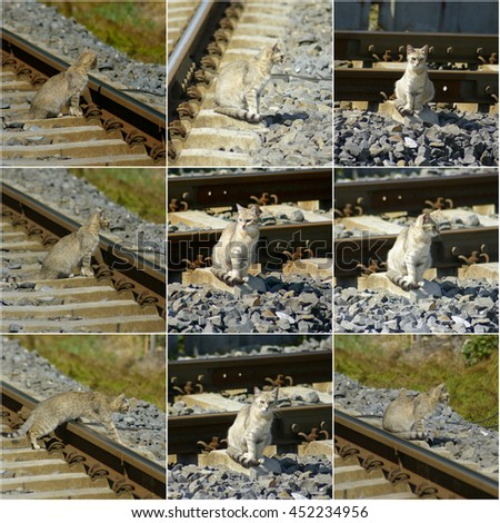 collage photos with cat on railway