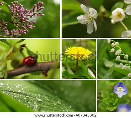 collage springtime (flowering trees and wild flowers) - stock photo