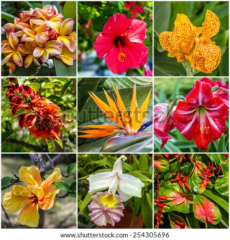 Collage: Tropical flowers in Madeira  - stock photo