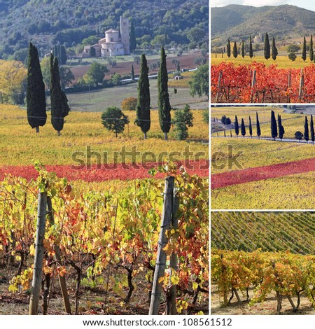 collage with fantastic landscape of tuscan vineyards in autumn, at horizon St. Antimo Abbey ,Castelnuovo dell'Abate,region of famous red italian wine Brunello di Montalcino, Italy, Europe - stock photo