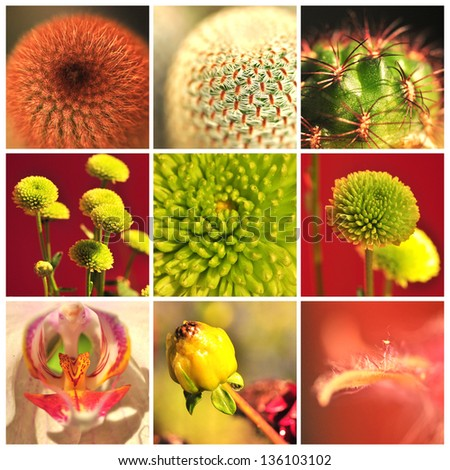 Collage with flower and cactus. - stock photo