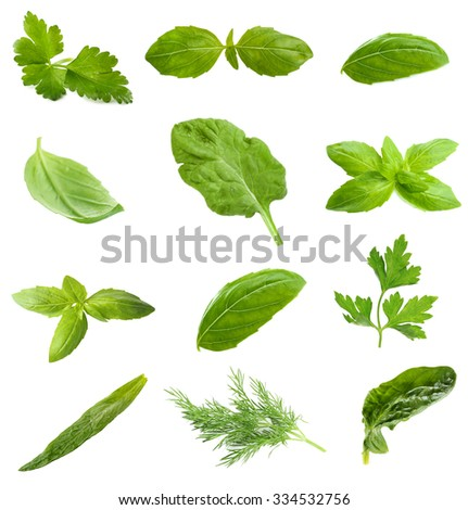 Collage with fresh green leaves of aromatic herbs, isolated on white - stock photo