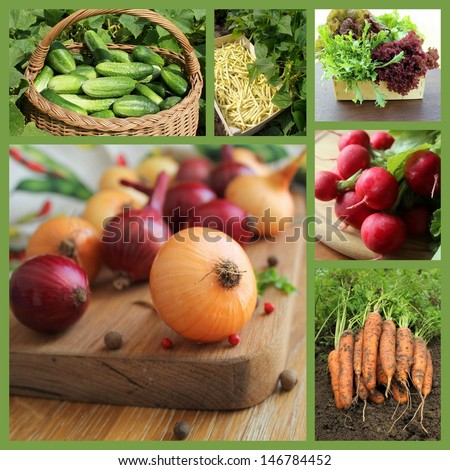 Collage with fresh natural vegetables - stock photo
