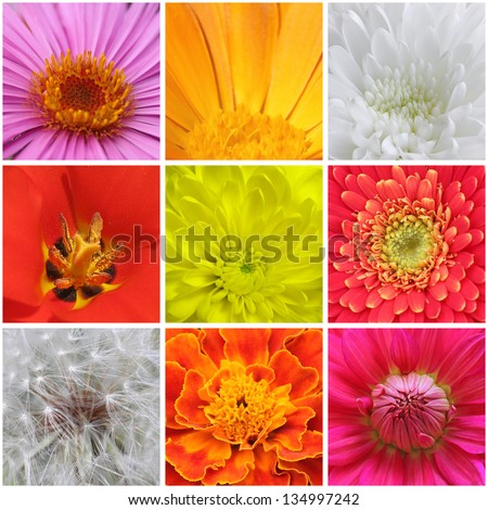 collage with macro photos of flowers