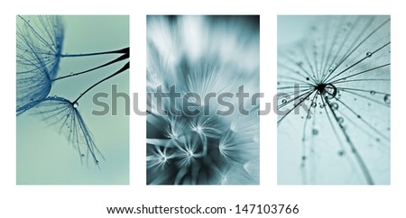 collage with photos of dandelions. artistic photos of dandelions - stock photo