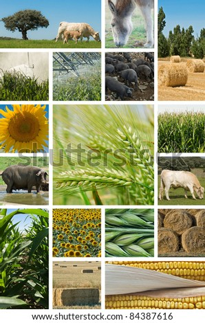 Collage with pictures about agriculture and animal husbandry.