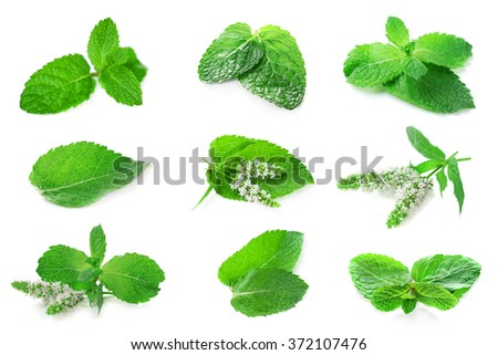 Collage with set of fresh mint, isolated on white - stock photo