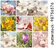 Collage with spring flowers, close up - stock photo