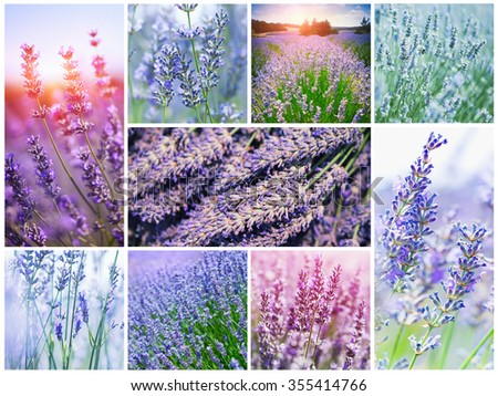 Collage with sunny French lavender