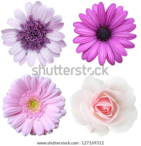 collage with violet flowers - stock photo