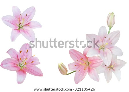 Colleage of Fresh pink lily flowers isolated on white background - stock photo