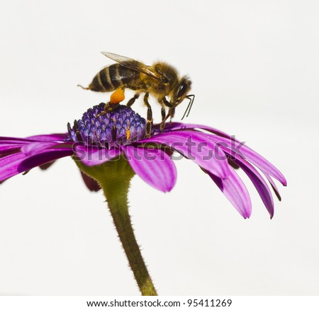 collecting bee - stock photo