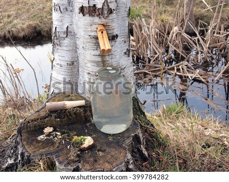 Collecting birch sap with wooden pipe from tree in glass jar. - stock photo